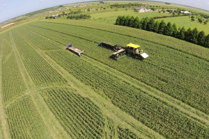 Crop rotation improves soil conditions at River View Turf Farm